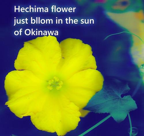 1Hechima_hana